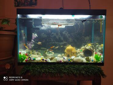 Akvarium 100l .On günün akvarium mudur bütün aksesuarları və balıqları