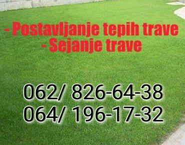 Usluge - Srbija: – sejanje trave- postavljanje tepih trave– freziranje baste