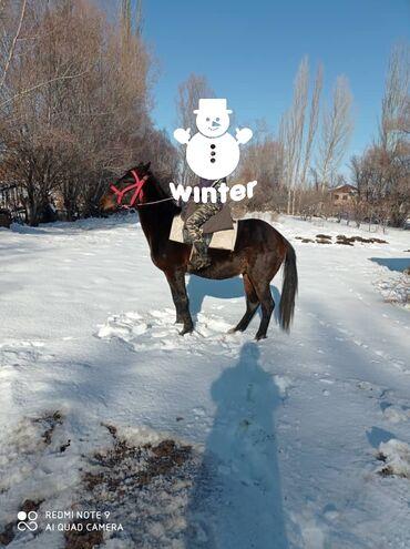 Кыздар сатылат москва - Кыргызстан: Кунан 2 жаш. Жорго