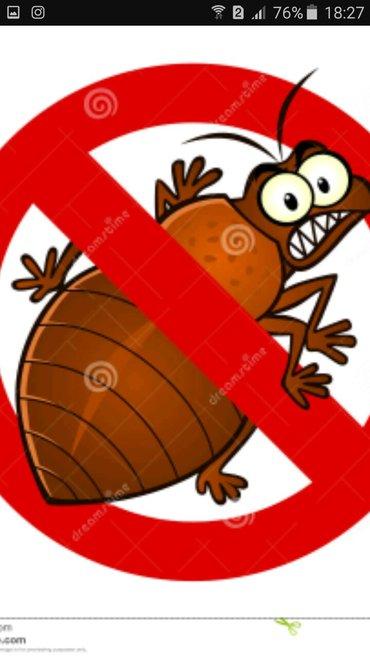 Уничтожение насекомых в Бишкек