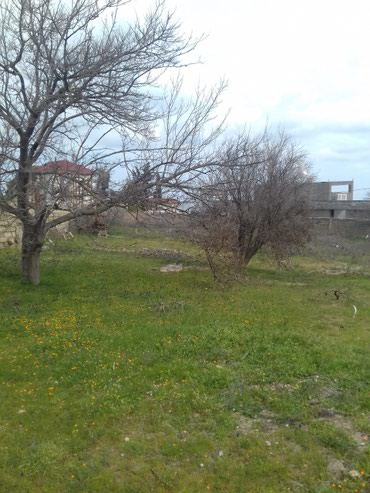 Bakı şəhərində Nardaran bağlarında əsas yoldan 200 m.məsafədə 30 sot bağ