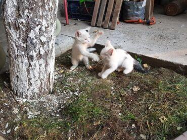 доставка продуктов в бишкеке в Кыргызстан: Отдаём в хорошие руки. Котята 2 месяца. Бесплатно.мышык. мышыктын