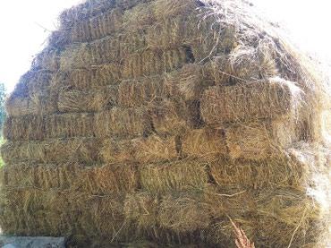 Продаю сено тюки разнотравие горные. в Бишкек