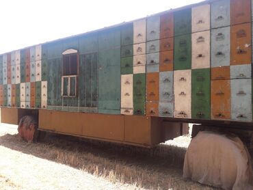 86 объявлений   ЖИВОТНЫЕ: (г.Шопоков)Срочная цена Пчелопавильон на 80 семей дадан три корпуса по