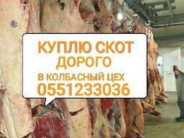 Куплю скот на мясо в колбасный цех