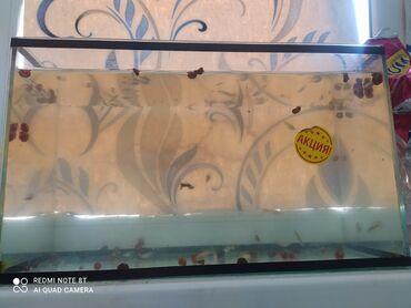 10926 объявлений: Продам аквариум с рыбками 60 шт