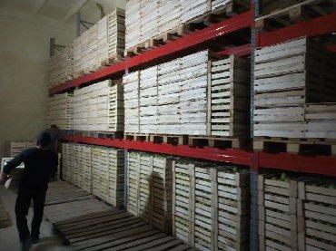 Аренда складов и мастерских в Кыргызстан: Сдаю овощехранилище на 50-60тонн село Садовое (рядом с Беловодское)