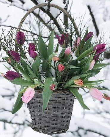цветы-сад в Кыргызстан: Приму в дар комнатные и садовые цветы. Для дома. Очень нужны