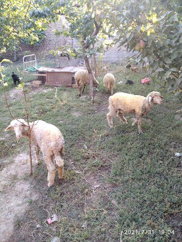 Животные - Сузак: Другие животные