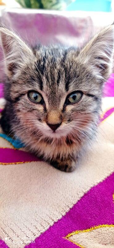 Одам в хорошие руки очень ласковый котенок