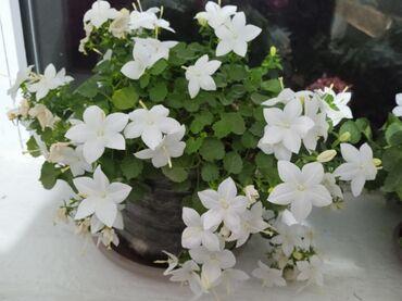 52 объявлений: Другие комнатные растения