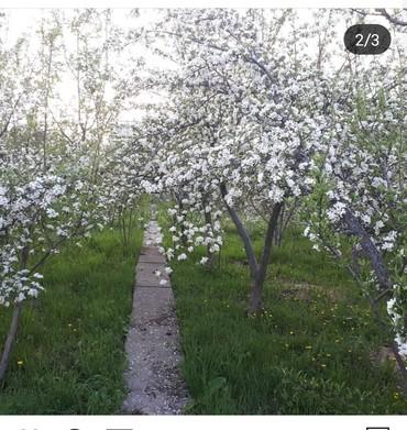 купить участок село байтик в Кыргызстан: Продам 5 соток Строительство