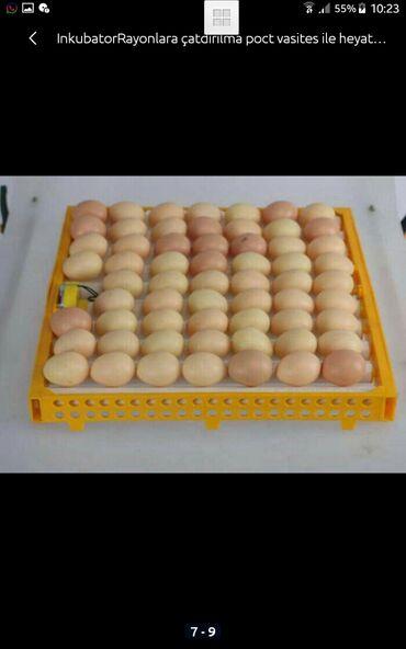 - Azərbaycan: İnkubator 63 yumurtali zavod istehsali,6 ekrani var,100%