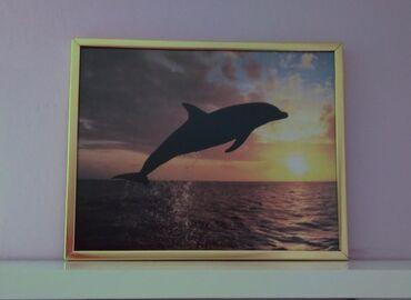 Ostalo za kuću | Beograd: Uramljena slika poster delfin. Dimenzije 26x21cm. Kaci se na zid. Bez