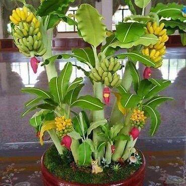 Kuća i bašta | Razanj: Semenke ukrasnih (neke su i jestive) biljaka Cena, informacije o sadnj