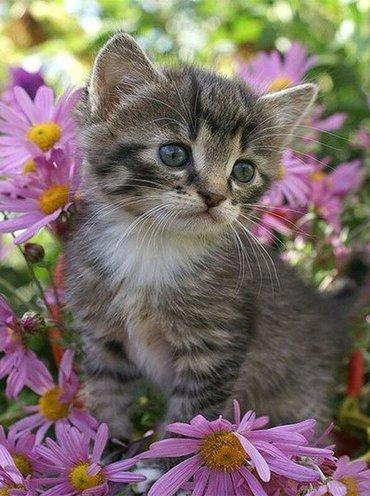Даром котенок в хорошие руки, мальчик красивый