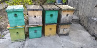 Животные - Полтавка: Продаю Улья для пчёл,нуклеусы. Семь рамок дадан. 10 штук. В середине