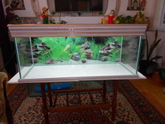 Bakı şəhərində Versage akvariumuna sifariwler qebul olunur