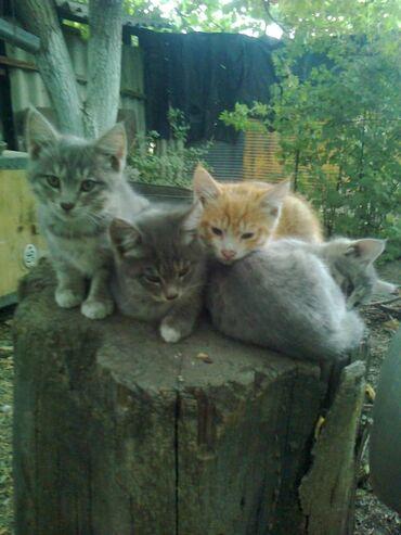 Находки, отдам даром - Кара-Балта: Отдам котят в хорошие руки