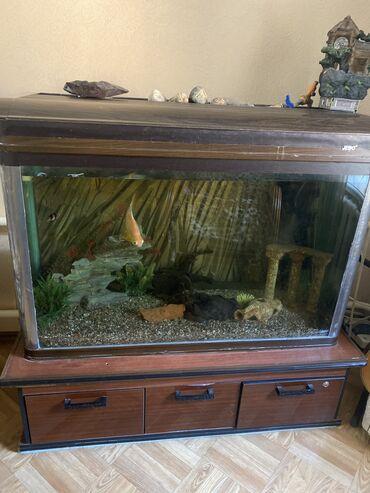 Аквариум Все в комплекте с тумбочкой и аквариумные укрощения