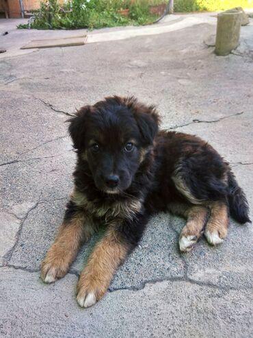 Пропал щенок девочка утром 24 июля в районе Рабочего городка