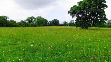 600 ares, Poljoprivredno zemljište, Vlasnik