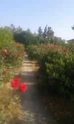 земельные участки семьям в Азербайджан: Продажа 15 соток