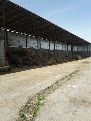 Продам Кошару в Сокулукском районе территория 0,35га огороженна