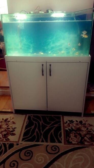 skidki na futbolki в Кыргызстан: Продаю аквариум вес комплект 140 л Длина 90см ширина 35см высота 45