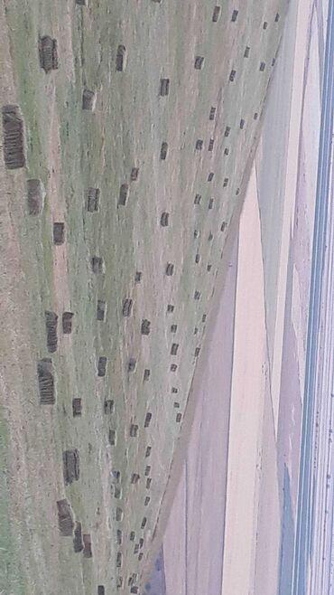 Животные - Узген: Адрес Туз-бел. Узгенского района, зона Куршаб