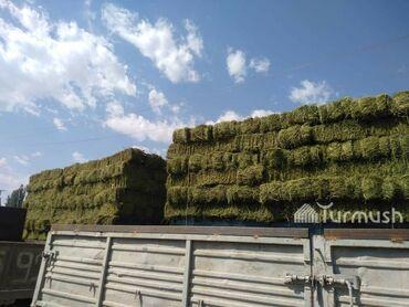 35 объявлений   ЖИВОТНЫЕ: Продаю тюки сена (Сулуу) общее количество 600шт. Цена 310сомов район