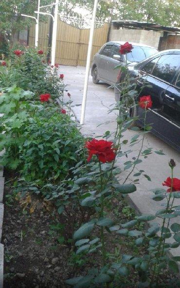 zapchasti na telefon в Кыргызстан: Продам Дом 100 кв. м, 5 комнат