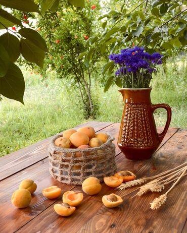 шоп тур в ташкент из бишкека в Кыргызстан: Самые вкусные абрикосы прямиком с Исык - Куля(Джети - Огуз). Идеально