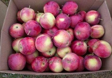 16 объявлений: Продаем яблоки оптом сорт рашида  есть первый и второй сорт