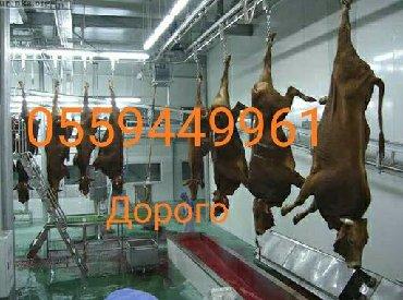 животный-с в Кыргызстан: Куплю скот на колбасный в любом виде