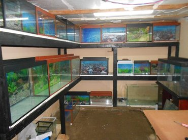 Bakı şəhərində akvariumlar muxtelif olculerde var  baliqlar ve aksesuarlar da var