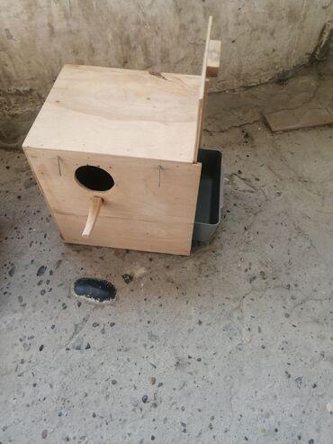 jako papuqay satilir - Azərbaycan: Tutuquşu yuva cütü 10 azn