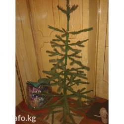 Продаю или меняю елку в Сокулук