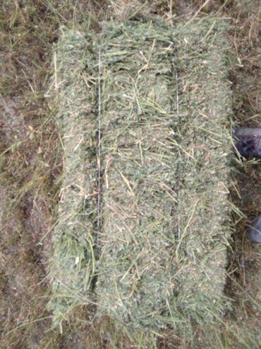Животные - Каинды: Продаю клевер и тюк, читайте внимательно. Второй кос, 600штукчистый