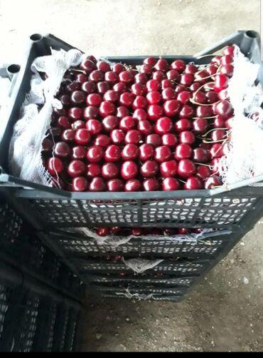 Другие товары для сада в Ак-Джол: Ящики для черещни.Размер ( ?20) Вместимость 8-9 кг КОЛИЧЕСТНО НЕ