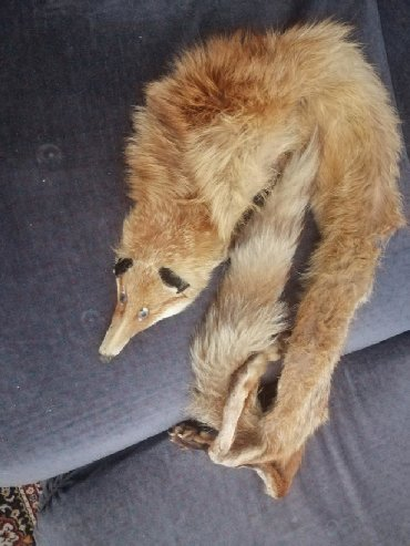 Avo krzno obim - Srbija: Krzno lisice