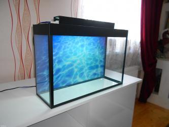 Bakı şəhərində akvarium teze endirim qiymetler