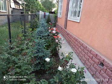 загородные дома отдыха бишкек в Кыргызстан: 120 кв. м 6 комнат, Евроремонт