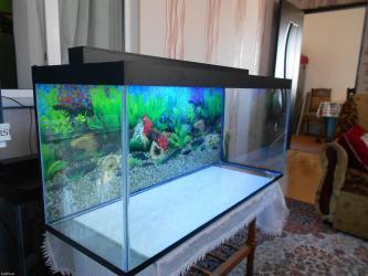 Bakı şəhərində woook endirim 220 litrelik akvarium teze