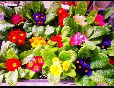 эмаком ош вакансии в Кыргызстан: Очень красивые цветы продаются