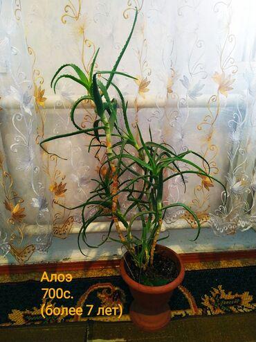 Торг есть.(город Кара-балта.)Коротко о комнатных растениях:цветы, как