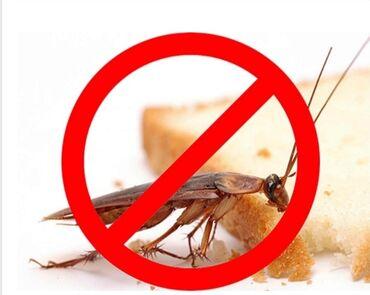 стол для гостиной в Кыргызстан: Дезинфекция Уничтожения тараканов клопов и других вредителей насекомых