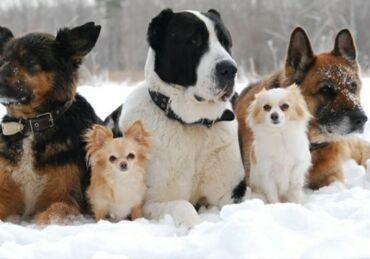 тиенс групп бишкек в Кыргызстан: Группа для прогулки собак только город Бишкек!! Писать только на