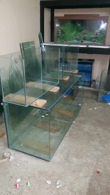 Bakı şəhərində Akvarium sifariwleri qebul olunur hazir akvariumlar var baliqlarda v