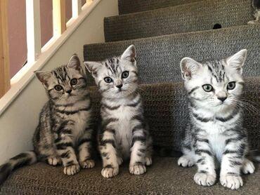 Αυτά τα γατάκια είναι όμορφα μέσα και έξω. Έχουν κοινωνικοποιηθεί καλά